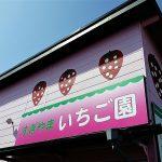 平塚市 すぎやまいちご園 7品種いちご狩り・食べ比べ放題 レポート