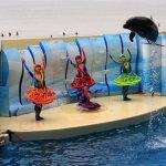 新江ノ島水族館|イルカショー・クラゲショー・深海2000・他施設 レポート