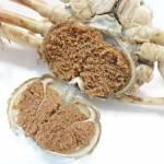 【食レポ】セコガニ|松葉ガニの雌は1年のうち2か月間しか味わえない珍味!です。