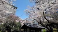 【お花見 2019】東京で絶対に外せない「桜の見えるレストラン」おすすめ8選!